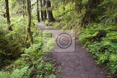 Wall Mural Trail to Punch Bowl Falls Oregon Forest Northwest