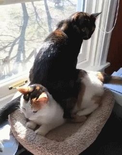 I like how it cuts off just before the bottom cat pounces on the top cat's tail.