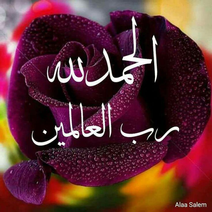 DesertRose,;,﴿وقل رب أنزلني منزلا مباركا وأنت خير المنزلين﴾ [المؤمنون: ٢٩],;,