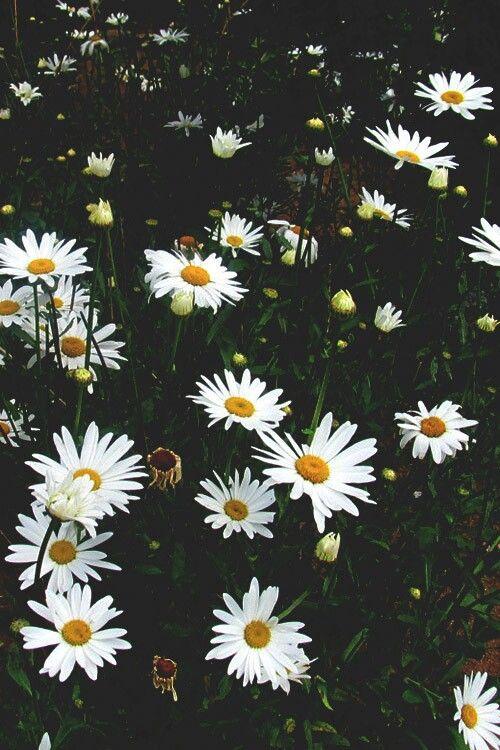восхитительно, красочно, цветы, гранж, хипстер, инди, природа, старое, винтаж, обои