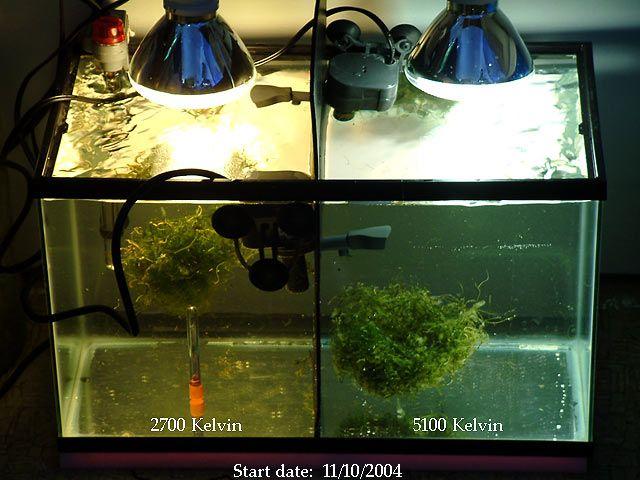 Refugium lighting for chaetomorpha in sump for Saltwater fish tank lights