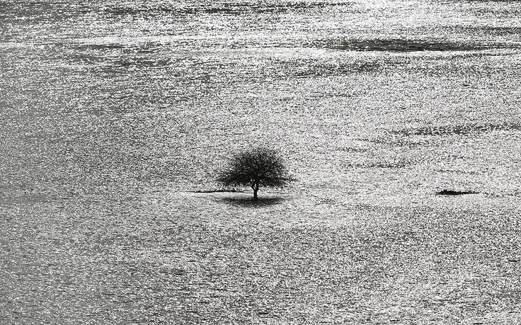 A lone tree stands in flood water from the River Arun near Arundel. Environment Agency flood warnings are in place for parts of the United K...