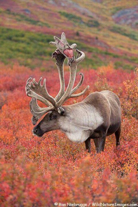 Magnificent Horns