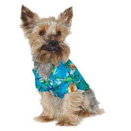 Aloha Tropical Dog Shirt - Designer Dog Clothes at GlamourMutt.com