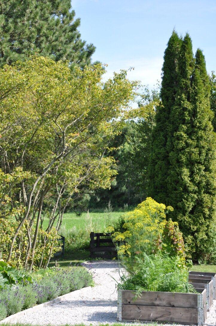 Pallkragar med grusgång och lavendel