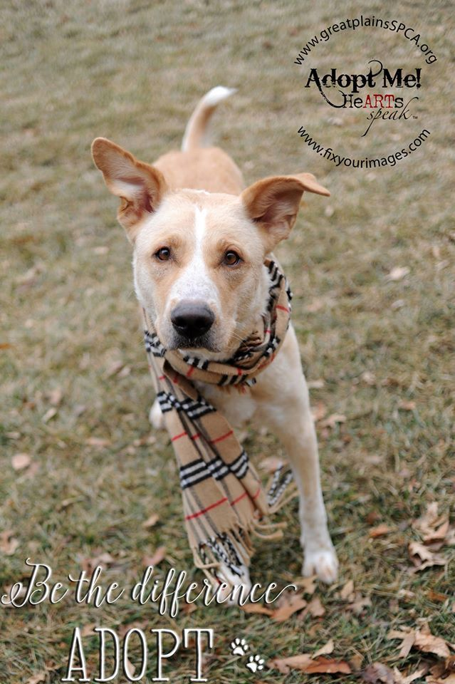 Why I Volunteer & Why You Should Too - Great Plains SPCA Adoptable Dogs
