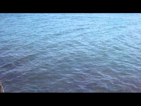 Leche - Hogar feat. Javiera Benavente