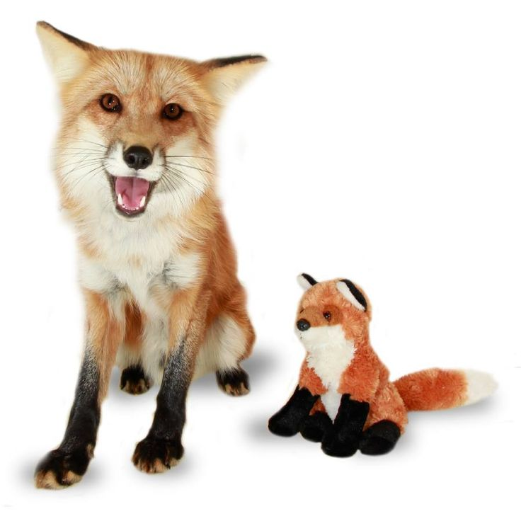 Forrest the fox is adorable and now you can make him part of your family with these stuffed animals available at The Earth Rangers Shop. http://www.theearthrangersshop.com/collections/all-products/products/red-fox-plushie