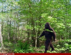 Sasquatch  est le nom donné à une créature légendaire qui vivrait au Canada et aux États-Unis.Également surnommé Bigfoot  par les premiers colons lors de la conquête de l'Ouest, du fait de sa grande taille présumée et surtout des empreintes gigantesques qu'il laisserait après son passage, cet être humanoïde occuperait principalement les grandes chaînes de montagnes (Adirondacks, Rocheuses, Appalaches) ainsi que les régions très boisées et faiblement peuplées par l'homme (les Everglades).