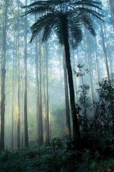Dandenong Ranges, wander through a world of whimsy.