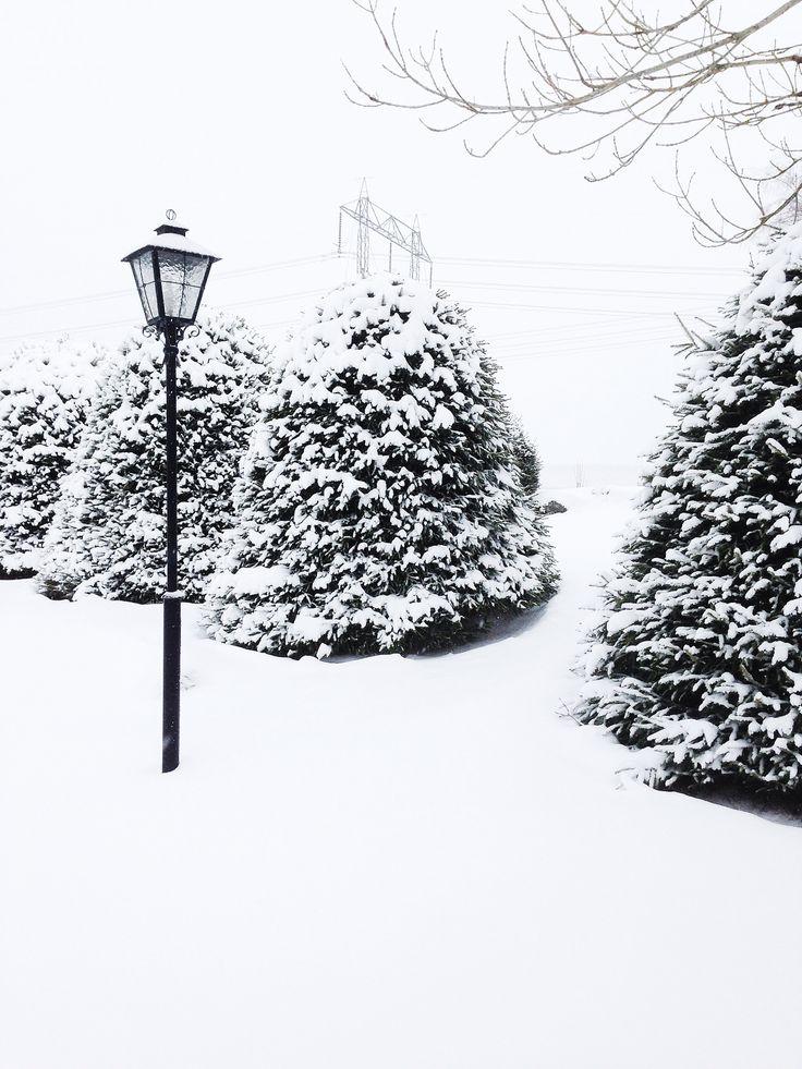 Vinter Winter Snö Snow