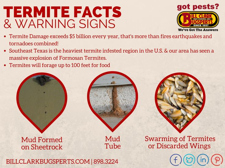 Termite Facts and Warning Signs