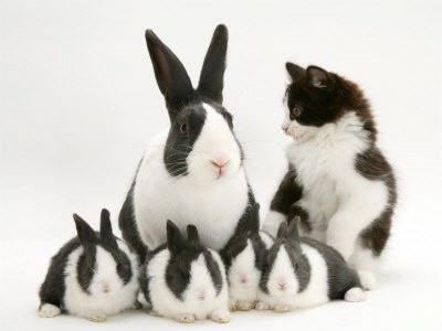 Cute family portraitRabbit, Cat, Identity Theft, Black And White, Easter Bunnies, Kittens, Families, Kids Gift, Animal