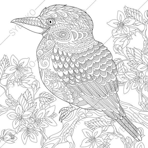 adult coloring pages kookaburra zentangle doodle coloring pages for adults digital illustration instant download print