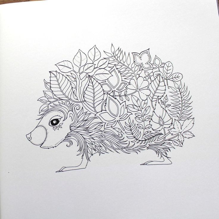 Enchanted Forest An Inky Quest Amp Coloring Book Johanna