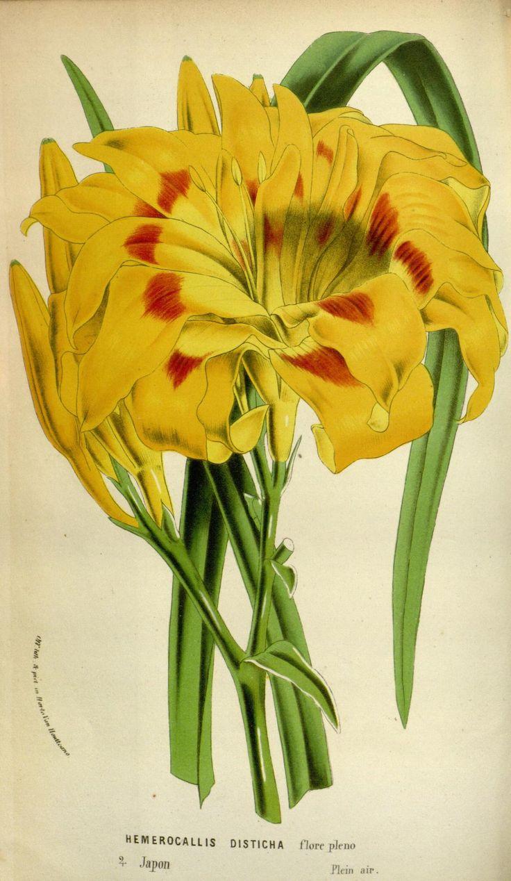 v.18 (1869-70) - Flore des serres et des jardins de l'Europe - Biodiversity Heritage Library