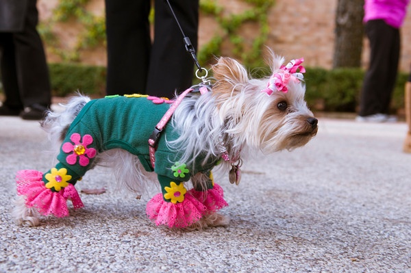 Adorable Dog Halloween Costumes At Chicago Botanic Garden 39 S Spooky Pooch Parade Hundekost Me