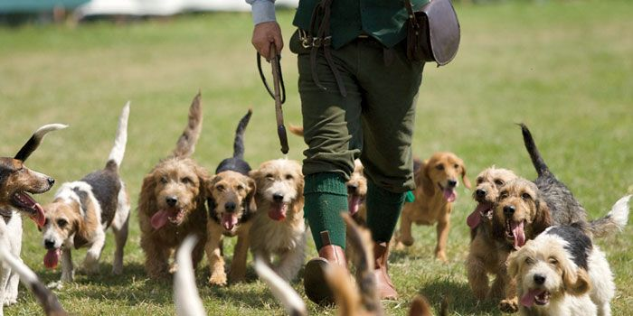 CLA Game Fair: Shooting, fishing, gun dogs, and whiskey sipping!!