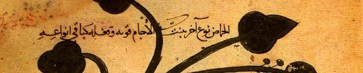 I anno - Lingua Araba, Islamistica, Dialogo.