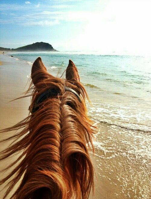 The best view of the ocean is seen between the view of a horse