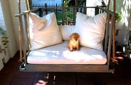 porch swing and adorable puppy
