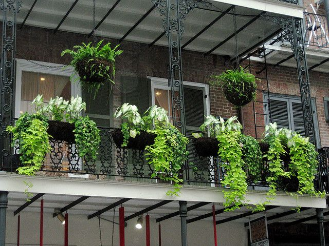 balcony plants by gail ralston via flickr balconies