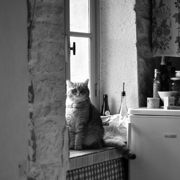 KittenBlack And White, Adorable Cat, Kittencat Baby, Nice Cat, Fat Cat, Cat Gallery, Kittens Cat, Baby Cat, Cat Photos