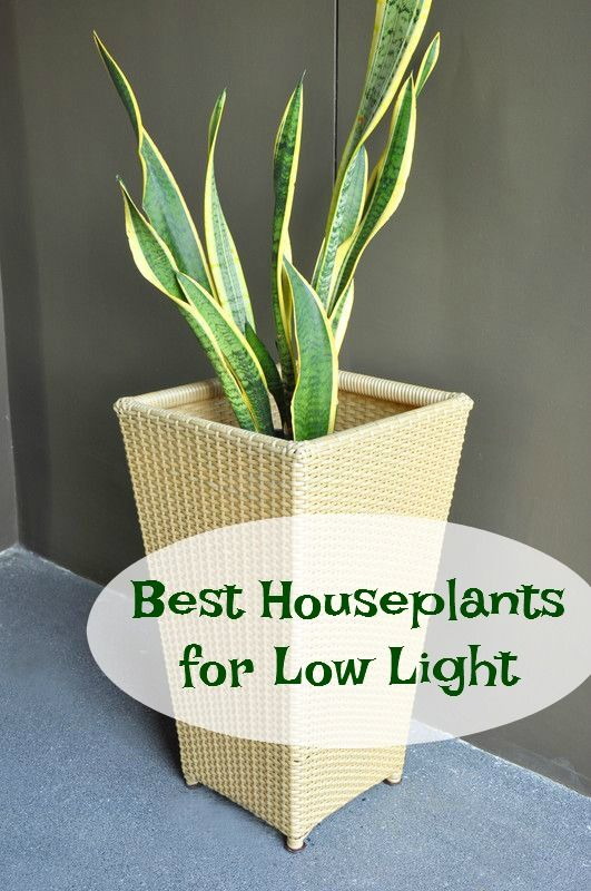 Best Houseplants For Low Light Houseplant Lights And House