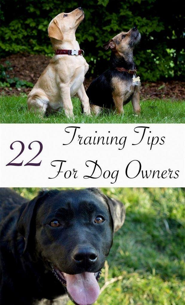 Dog Training Jump Bar Dog Training Questionnaire Robert Cabral