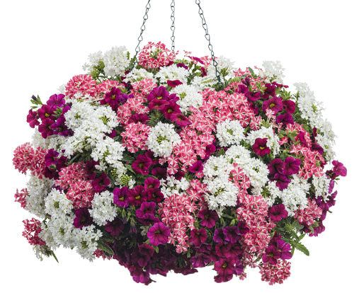 Hanging Flower Baskets Seattle : Best hanging flower baskets ideas on