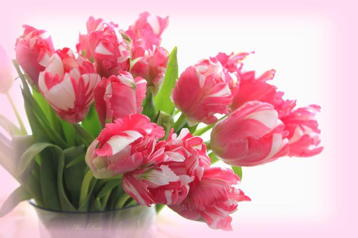 Картинки с весенними цветами и надписями, днем