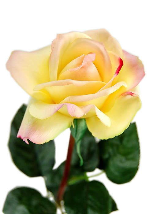 Flowers-by-Design.com - Real Touch MEDIUM Rose, $4.64 (http://www.flowers-by-design.com/real-touch-medium-rose/)