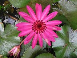flower jpg