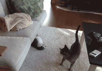 hug attack