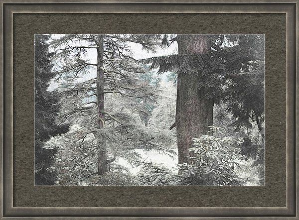 Jenny Rainbow Fine Art Photography Framed Print featuring the photograph Natural Magnetism. Shabby Chic Collection by Jenny Rainbow