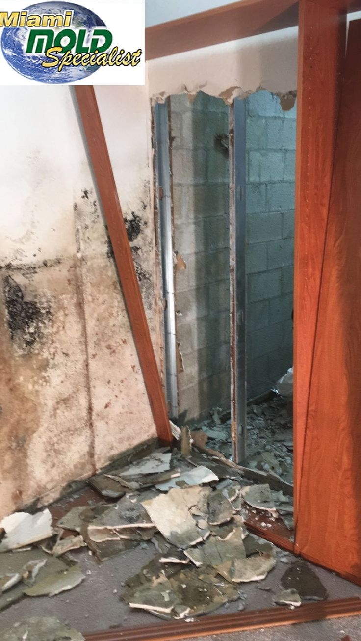 The State Of Florida licensed and certified mold removal and mold remediation experts at Miami Mold Specialist has been assisting the Miami and Fort Lauderdale with mold and mildew for over a two decade.