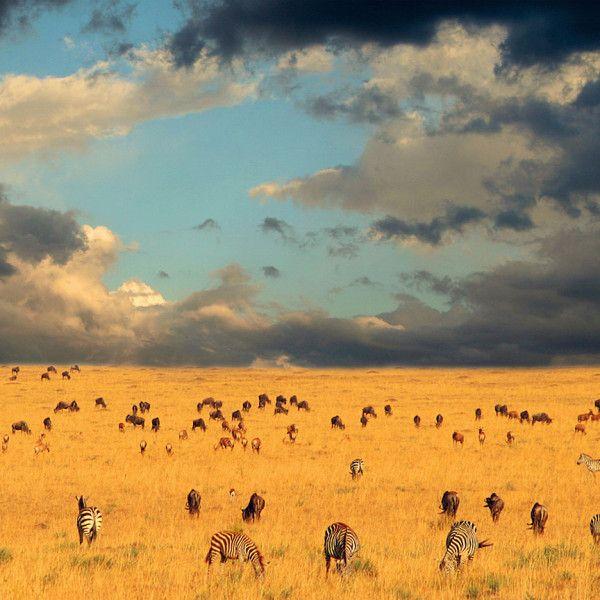 Serengeti Wildlife Migration | Visit Tanzania Tours & Safaris     experience natures wonderful gift in tanzania