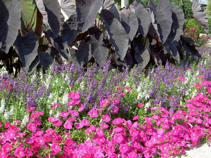 Flower bed ideas with elephant ears