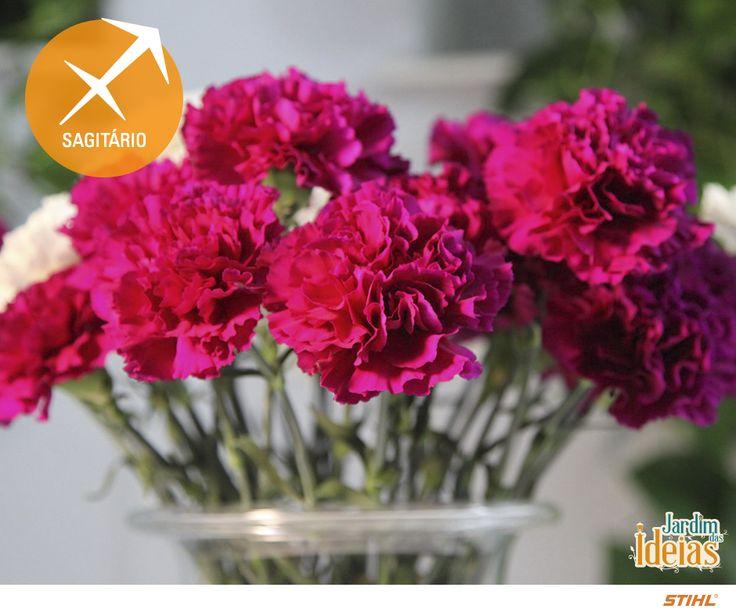 A dica de hoje é para os aniversariantes de 22 de novembro a 21 de dezembro. As flores dos sagitarianos são: cravos e orquídeas. E aí, você é desse signo ou conhece alguém que seja? Comente aqui <3