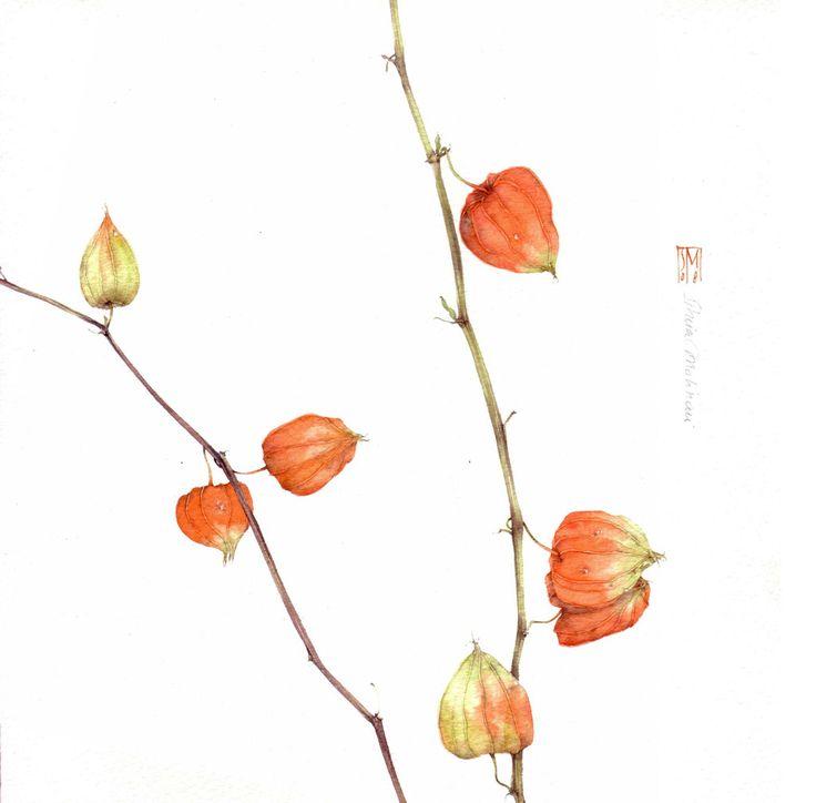 Resultado de imagen de silvia molinari acquerelli