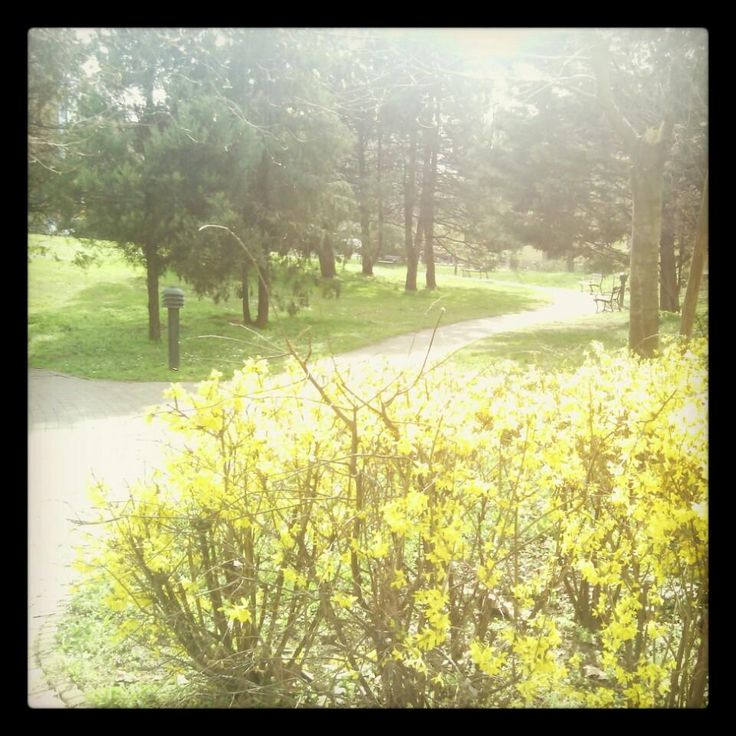Spring in our Park #aquincumhotel by Eszter F. on Foursquare