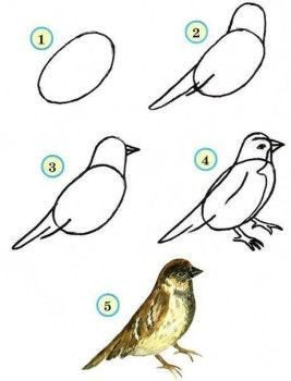Vögel sind leicht zu zeichnen – Anweisungen für Anfänger-dekoking-6