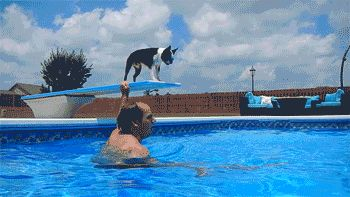 Howie Dives off the Diving Board (And Swims to the Bottom!!)