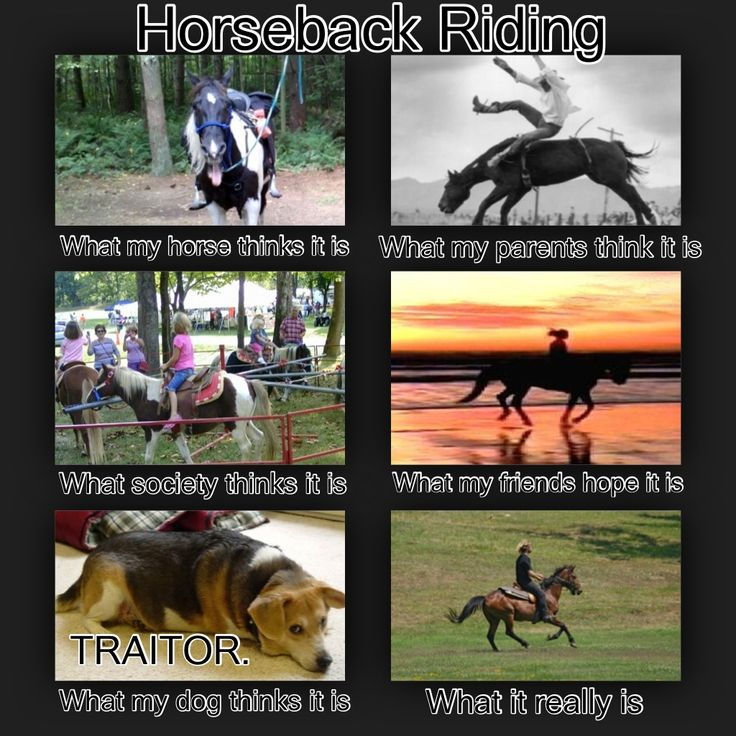 Persuade someone to think horses are the best pet. EASY!!!!!?