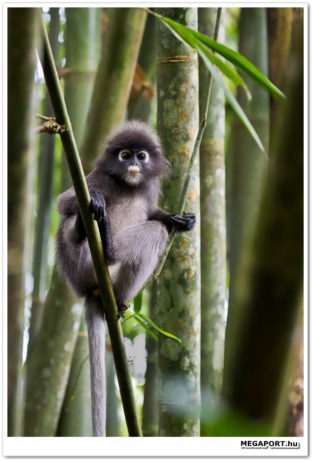 Little Monkey http://www.megaport.hu/news/news-animals.php