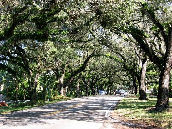 Miami coconut grove..I remember before Hurricane Andrew the foliage here was so thick you barely saw the sunlight..