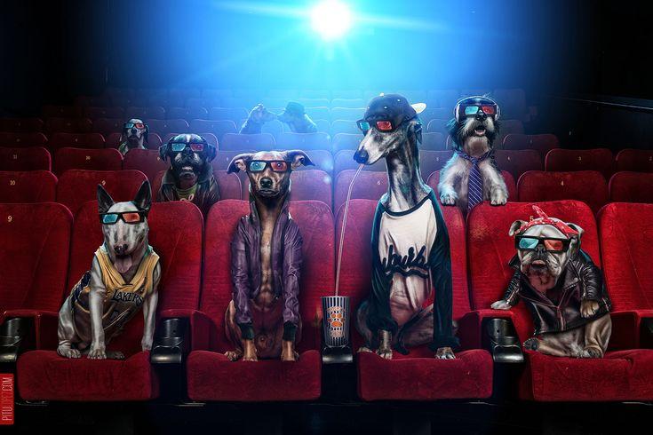 Doggy Cinema