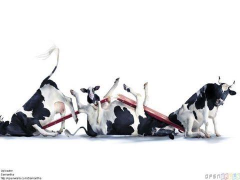 La Vaca Lechera - Canciones Infantiles - YouTube