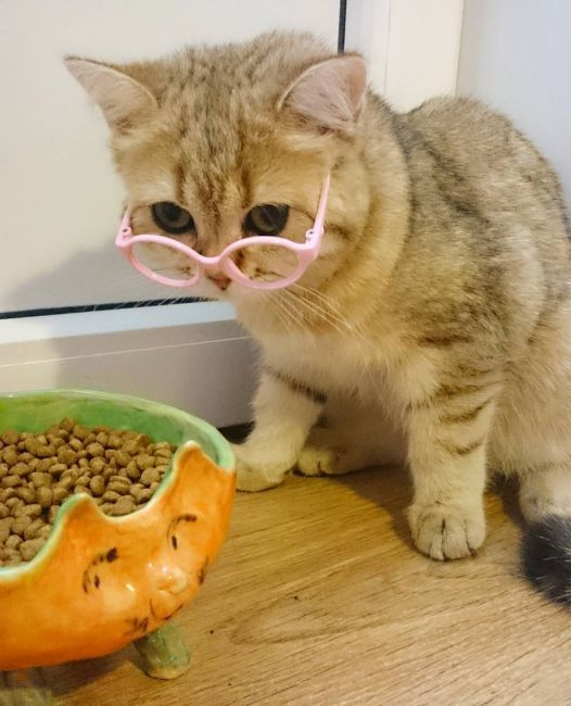 Кошачьи приколы, фотки смешных кошек до слез