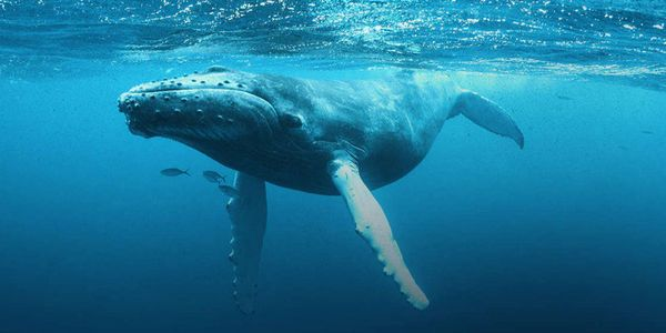 Tell The White House to Protect Whales From Harmful Noise Pollution. http://www.thepetitionsite.com/es-es/takeaction/868/474/421/?taf_id=31546849&cid=fb_na